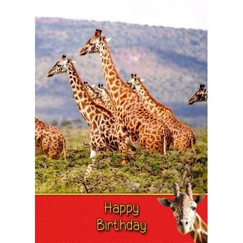 IF YOURE LOOKING FOR TROUBLE YOUVE HIT THE JACKPOT GREETING CARD BIRHTDAY BLANK