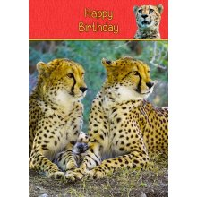 "Cheetah Birthday Greeting Card 8""x5.5"""