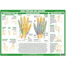 Hand Function and Anatomy Poster