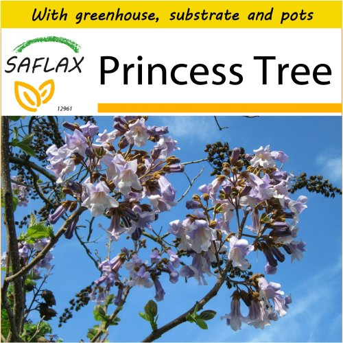 SAFLAX Potting Set - Princess Tree - Paulownia tomentosa - 200 seeds - With mini greenhouse, potting substrate and 2 pots