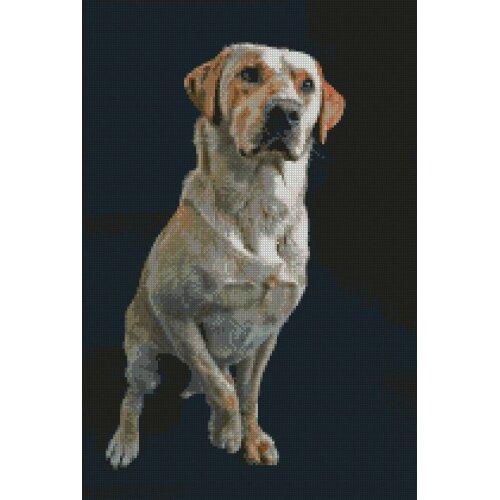"Golden Labrador lab Dog Puppy Cross Stitch Kit 10"" x 15"""