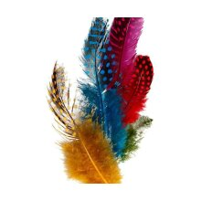 Feathers From Guinea Fowl, CC 51813