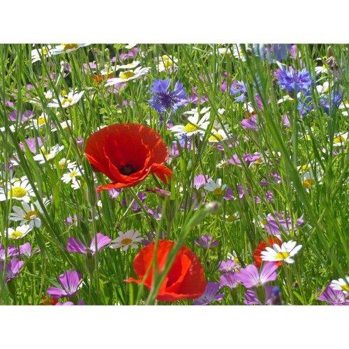 Wild Flower - Special Flower Mixture - Cornfield Annual - 4g
