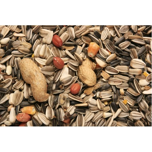SkyGold Special Parrot Cage & Aviary Seed Mix 12.5Kg