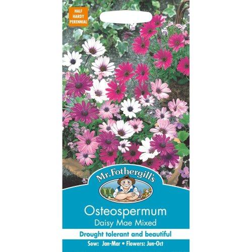 Mr Fothergills - Pictorial Packet - Flower - Osteospermum - Daisy Mae Mixed - 25 Seeds