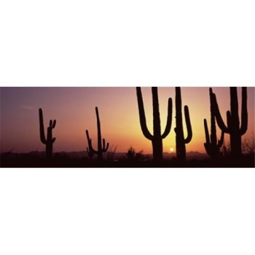 Silhouette of Saguaro cacti - Carnegiea gigantea on a landscape  Saguaro National Park  Tucson  Pima County  Arizona  USA Poster Print by  - 36 x 12