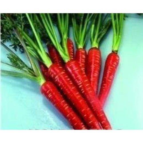 Vegetable - Carrot - Red Samurai F1 - 500 Seeds