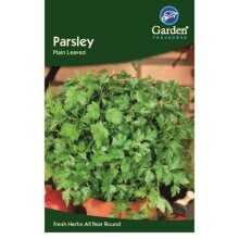 Parsley Seeds Plain Leaved  Herbs Garden Treasure 275 seeds