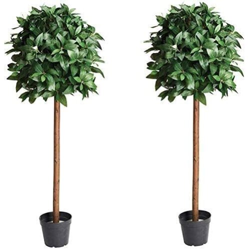 Abaseen PAIR of Artificial Bay Laurel Trees - 4ft high Tree with real wood trunk and natural leaf