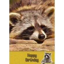 """Raccoon Birthday Greeting Card 8""""x5.5"""""""