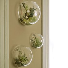 3-piece glass container houseplant flowerpot wall vase