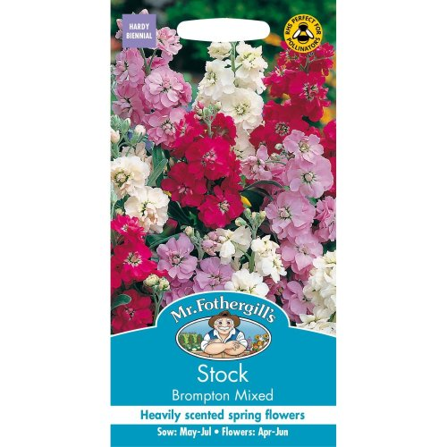 Mr Fothergills - Pictorial Packet - Flower - Stock Brompton Mixed - 150 Seeds
