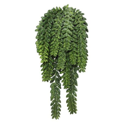 Donkeys Tail Bush X14 with 1311 Bean Succulent - 13 in.