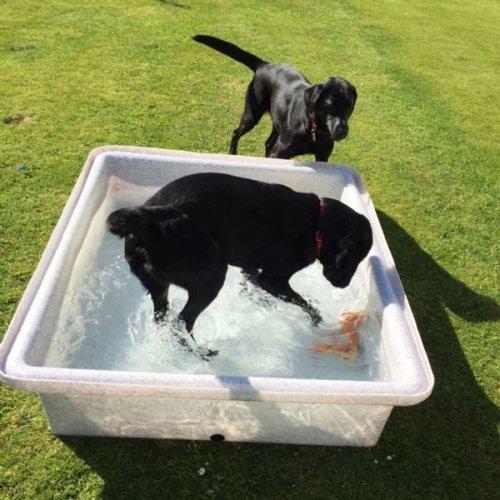 Dog Splash Outdoor Pool Summer Garden Play Cool