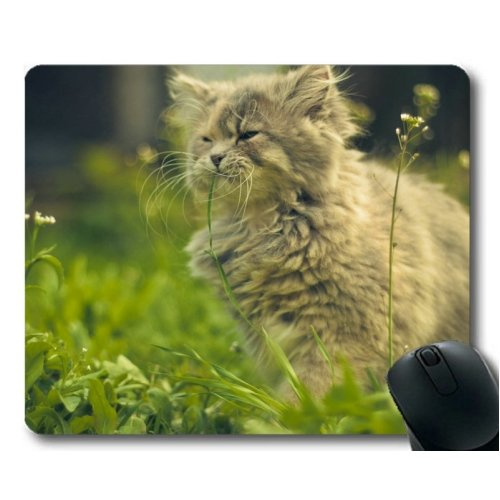 Gaming Mouse pad,Animal cat mouse pad,Mouse mat for Computer cat253