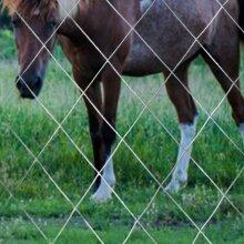 "1""x1"" Welded Wire Mesh Aviary Fence Garden Galvanised 0.9x6M"