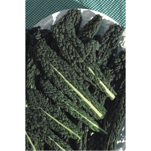 Kale, Cavolo Nero, Nero de Toscana (4500) (15.0g) Vegetable Seeds