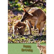 "Kangaroo Birthday Greeting Card 8""x5.5"""