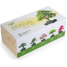 Grow Your Own Bonsai Tree Kit 5 Different Trees & Accessories Gift