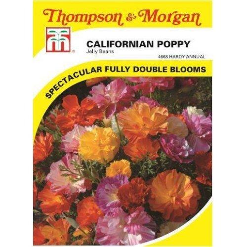 Thompson & Morgan - Flowers - Californian Poppy Jelly Beans - 125 Seed