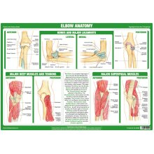 Elbow Joint Anatomy Poster