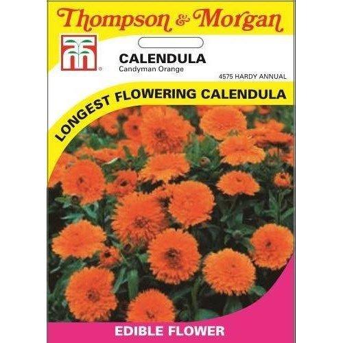 Thompson & Morgan - Flowers - Calendula Candyman Orange - 100 Seed