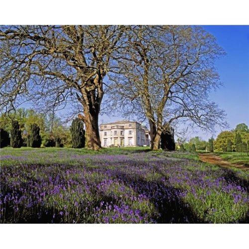 Bluebells in The Pleasure Grounds Emo Court Co Laois Ireland Poster Print by The Irish Image Collection, 30 x 24 - Large
