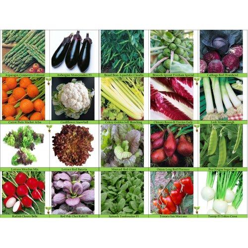 20 Packs of Vegetable Seeds - Tomato, Celery, Leek, Pea, Mustard Red Zest etc.