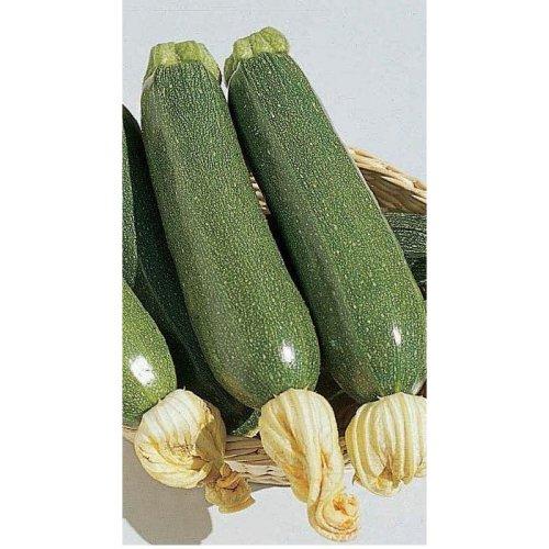 Vegetable - Courgette - Defender F1 - 8 Seeds
